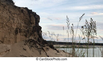 Sandy cliff with the roots of trees