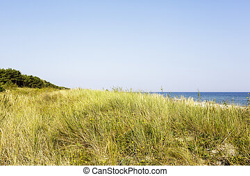 Sandy dune covered with the grass