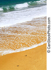 Sandy ocean beach - Ocean wave advancing on a yellow sandy ...