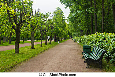 path in park at summer day