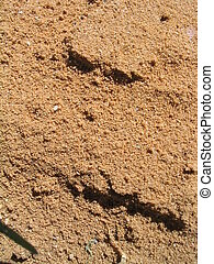 Sandy-Red Dirt - Reddish dirt with slightly large sand-sized...