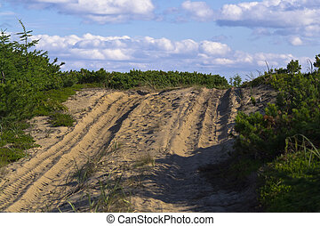 sandy road in the forest tundra landscape on a sunny day