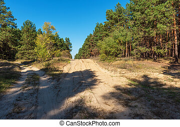 sandy road in the middle of a green coniferous forest