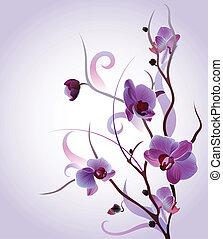 sanft, zweig, orchidee