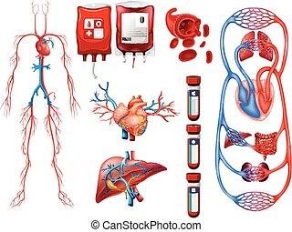 sangue bate, e, respirar, sistema