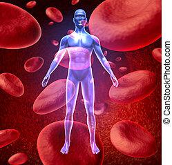 sangue, human, circulação