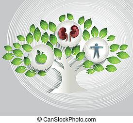 sano, albero, concetto, stile di vita, reni