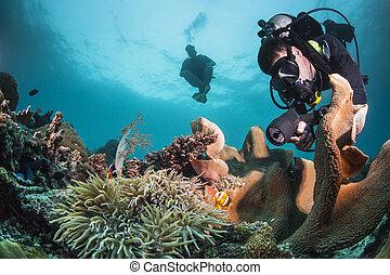 sano, buzo, arrecife