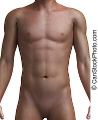 sano, maschio, torso