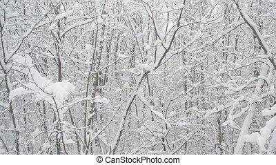sans feuilles, neige, arbres, à feuilles caduques, forêt, fond, tomber