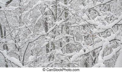 sans feuilles, neige, arbres, forêt, fond, tomber