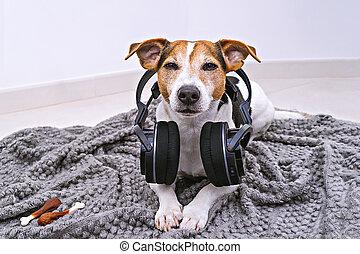 sans fil, mensonges, couverture, écouteurs, chien