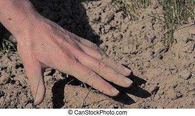 sans, séché, épuisé, extremly, terrain, ground., eau, pré, ...