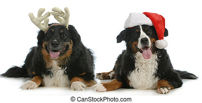 santa and rudolph dogs