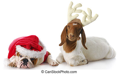 santa and rudolph - dog dressed up as santa and goat dressed...
