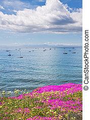 santa barbara, anchorage, et, fleurs