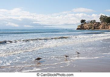 Santa Barbara Seascape