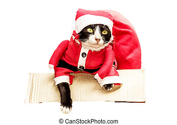 Santa cat in the box with big gift red bag on a white background isolated with clipping path.