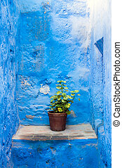 Santa Catalina flower pot - Flower pot in Santa Catalina...