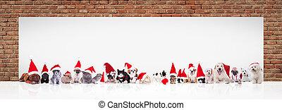 santa claus animals near big blank billboard