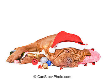 Santa Dog Sleeping with a Bottle of Champagne on Christmas...