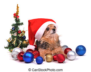 Santa dog with Christmas decorations