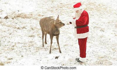 Santa feeding deer - Santa Claus feeding deer and stroking...