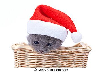 santa, gatito
