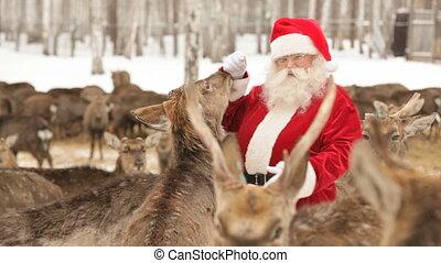 Santa has herd