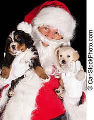 santa, mit, zwei, hundebabys