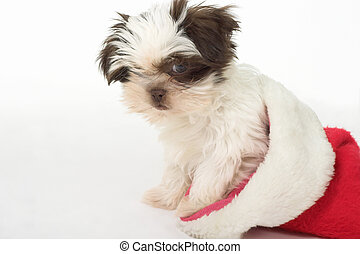 Santa Puppy 2