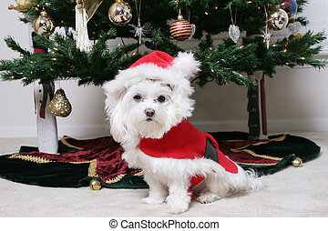 Santa Puppy - Christmas Puppy