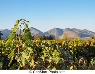 Santa Rita Winery near Santiago de Chile