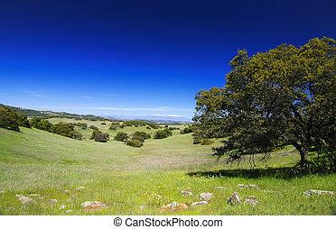 Santa Rosa Plateau in spring (California)