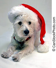 West Highland Terrier wearing a red Santa Claus hat
