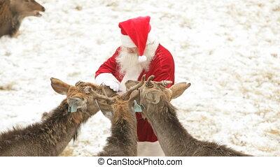 Santa's pets - Zoom out of Santa Claus caressing his pets ...