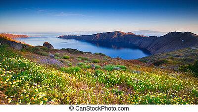 santorini, wildflowers