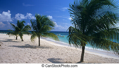 Saona island beach and palm trees - Dominican republic