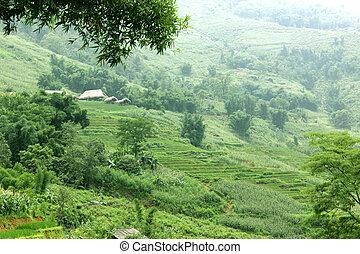 Sapa - Green Rice Fields in Sapa, Northvietnam