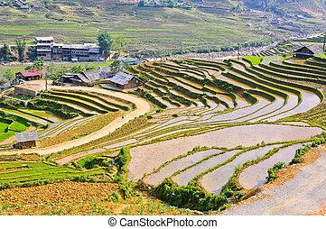 Sapa rice terraced fields in Hmong minority village, Vietnam