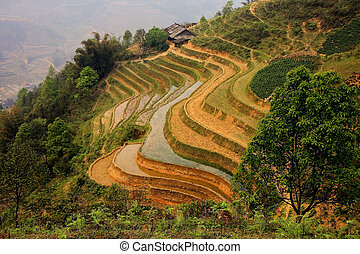 Sapa ricefield terraces - A scenic view of a traditional...