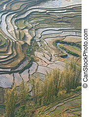 Sapa - Traditional Ladder Farming, Rice Paddle Fields, in...