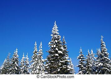 sapin, bois, hiver