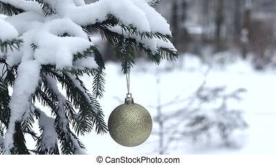 sapin, branche, neige, snow., fond, tomber