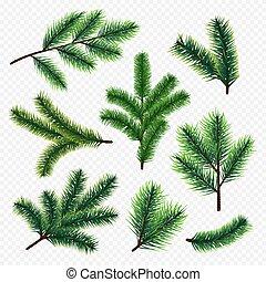 sapin, branches, arbre, isolé, vecteur, fond, transparent