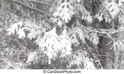 sapin, branches, arbre, neige, chargé