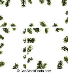 sapin, branches., arrière-plans, hiver