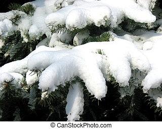 sapin, branches, hiver, neige, 1, sous