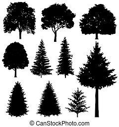 sapin, conifère, ensemble, arbres feuillage caduc, silhouettes, vecteur, forêt