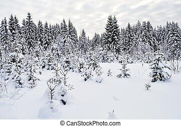 sapin, forêt, arbres hiver, neigeux